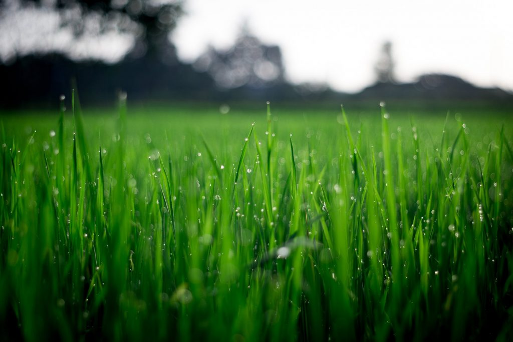 groene tuin onderhoudsvrij